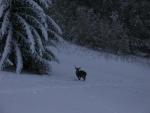 jelen pod naši chalupou